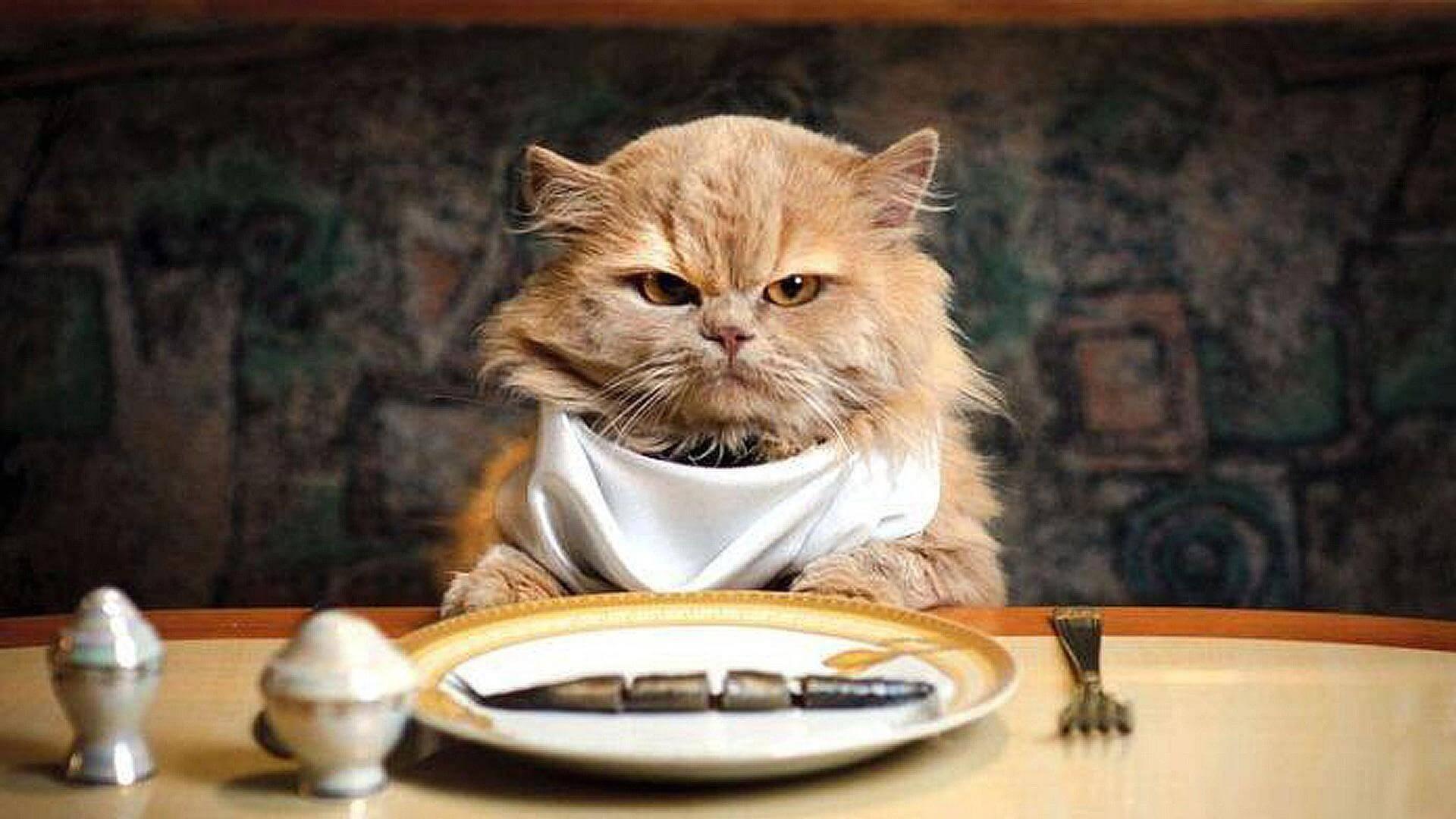 wallpaper-cat-eat-fish